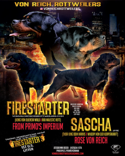 Firestarter Rottweiler Puppies